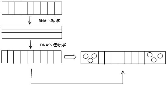 pu36図2