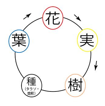 五行(植物)